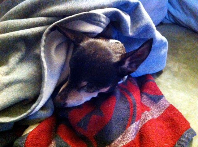 Ginny sleeping